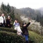 """活动回顾:浓雾里的""""春雪"""",是树枝上的早樱"""