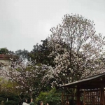 活动回顾|【慢徒步】探寻春天的足迹之鹅岭公园和佛图关公园
